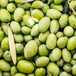 olive nocellara etnea